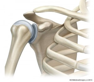 shoulder-bone-preview